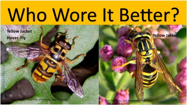 Who wore it better yellowjacket3