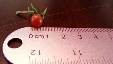 tomato-1560267_1280