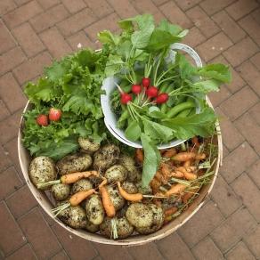 vegetables-1626783_1280